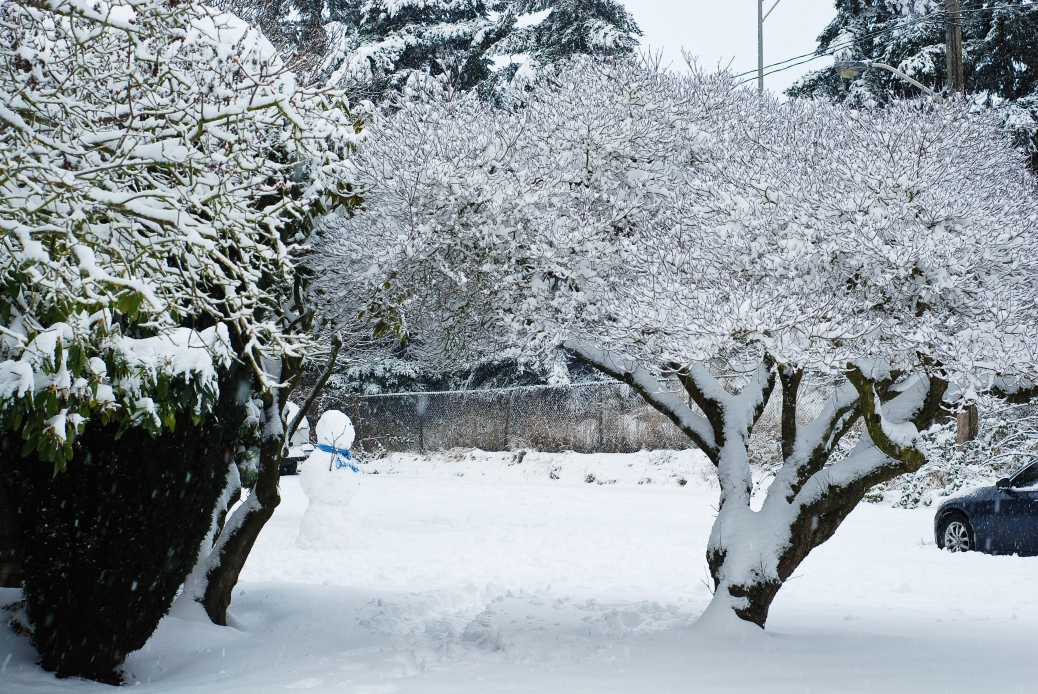 snowy_trees_and_men_seattle_2008