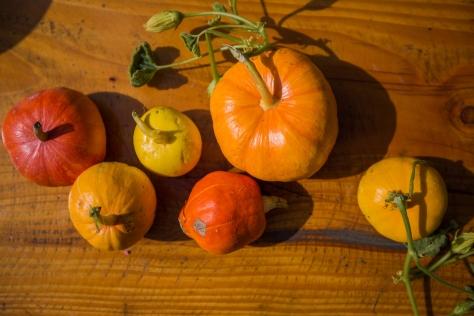 The_Farm_Pumpkin_Harvest_01